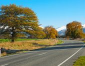 Autumn road, Canterbury, NZ