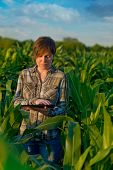 stock photo of land development  - Female agronomist with tablet computer in agricultural cultivated corn field - JPG