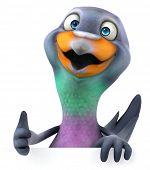 pic of pigeon  - Pigeon - JPG