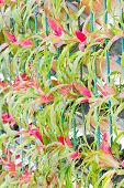 stock photo of bromeliad  - Colorful Bromeliad Vertical Gardening Field In The Garden - JPG