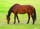 pic of pastures  - Farm animal  brown horse on pasture  - JPG