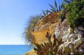 image of peculiar  - Cactus garden on Armacao De Pera Beach Portugal - JPG