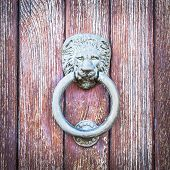 picture of lions-head  - Lion head on wood - JPG