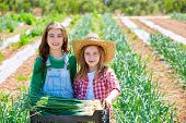 stock photo of orchard  - Litte kid farmer girls in onion harvest at orchard - JPG