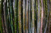 stock photo of bamboo forest  - close up with a fisheye of a bamboo forest where tourists have scratch their names and messages on the green bark - JPG
