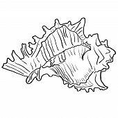 foto of beach shell art  - Marine hand drawn shell - JPG