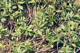 pic of defloration  - Deflorate rhododendron on mountains - JPG