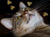 image of catnip  - Cat looking up at her favorite snacks floating in the air - JPG