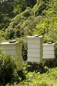 stock photo of bee keeping  - Three white bee hives in a field - JPG