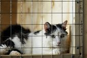 Sad Homeless Alone Cat, Looking Looking With Hope From Lattice Of Cell, Waiting For Owner With Home. poster