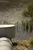 stock photo of bull rushes  - Polluted pond with drain pipe and bull rush - JPG
