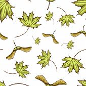 Seamles Scolored Maple Leaf And Seeds Pattern. Vector Vintage Colored Engraved Illustration Of Maple poster