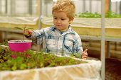 Kid In Greenhouse. Kid In Greenhouse Working With Flowers. Small Kid In Greenhouse Growing Trees. Ki poster