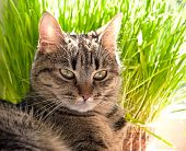 Portrait Of Beautiful Tabby Cat poster