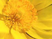 Macro Shot Yellow Flower Background. Yellow Floral Macro. poster