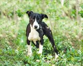 Cute slim doggy is very careful when seeing humans in local garden poster