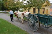 picture of ox wagon  - Costumed villager recreates 19th Century daily life in Mumford NY October 2006 - JPG