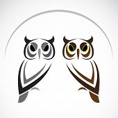 pic of night-blooming  - Vector image of an owl on white background - JPG