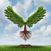 pic of evolve  - Moving up and the power of success with a growing tree in the shape of wings that has emerged out and has taken flight upward to opportunity as a business concept of the evolution of successful leadership and strategic planning - JPG