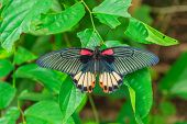 stock photo of butterfly-bush  - Big beautiful butterfly sits on the leaf of a tree - JPG