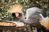 foto of manger  - beautiful crane eating food from the manger  - JPG