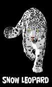 picture of snow-leopard  - Snow leopard animals wildlife illustration art vector - JPG