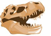 pic of dinosaur skeleton  - dinosaur bones isolated on a white background - JPG