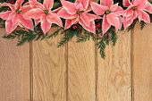 pic of greenery  - Pink poinsettia flower background border with holly and christmas greenery over oak wood - JPG