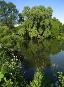 stock photo of willow  - Summer lanscape with water - JPG