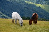 stock photo of yin  - Yin yang black and white horses feeding on the mountain pasture with mountains in background - JPG