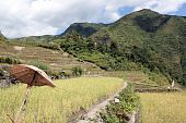 picture of ifugao  - Umbrella and rice terrsses in Batad near Banaue - JPG