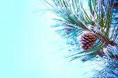 stock photo of pine cone  - A snow - JPG