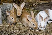 pic of tame  - Interested tame domestic rabbits in a cage - JPG