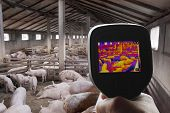foto of swine flu  - Swine Flu Detection with Thermal Camera - JPG