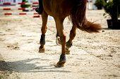foto of high-quality  - high resolution and superb quality equine themed photos - JPG