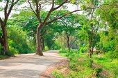 foto of dirt road  - Tree staying on the road and lawn along dirt path - JPG