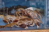 foto of cooked blue crab  - seafood at the fish market in the aquarium - JPG