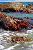 foto of algae  - Coast with stones and with marine algae - JPG
