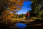 Cycling, mountain bikeing woman on cycle trail in autumn forest. Mountain biking in autumn landscape poster