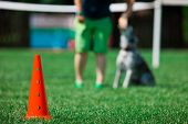Red Cone And Dog In Background During Obedience Training poster
