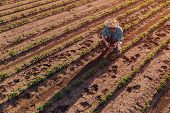 Farmer With Drone Remote Controller In Soybean Field, Aerial View Of Farm Worker Observing Crop Plan poster