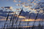 picture of sea oats  - Sun - JPG