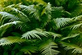 Fern leaves Natural Background, Beautiful Forest Plant Ferns Leaves, Tropical Leaves Foliage Plant B poster