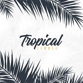 Summer Tropical Palm Leaves. Exotic Palms Tree. Floral Background. poster