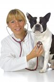 female vet doctor