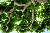 View in a plane tree