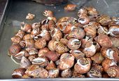 image of whelk  - Whelks at the fresh market in Thailand - JPG