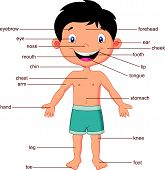 image of chest hair  - Vector illustration of Cartoon vocabulary part of body - JPG