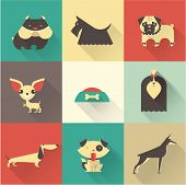 picture of scottish terrier  - Cute vector illustration of various dog breeds - JPG