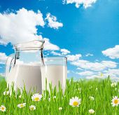 Milk jug and glass full of milk in grass with blooming chamomiles. Blue sky with clouds on backgroun